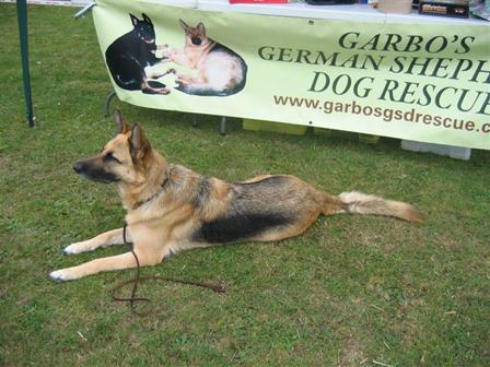Garbo Dog Rescue